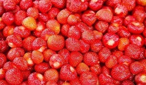 Fresas rojas frescas de Valldal, en la carretera de Ålesund a los fiordos y troles