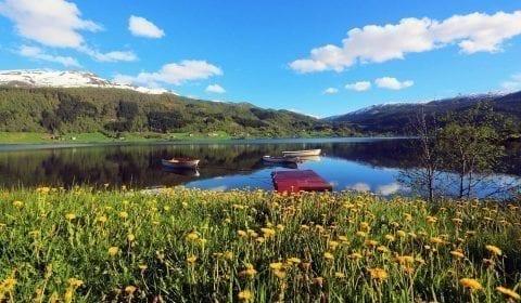 Flores amarillas en un campo verde a la orilla de un fiordo, Noruega