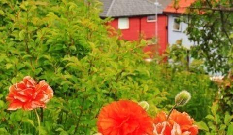 Flores de colores en un jardín en Molde con un crucero en el fiordo Romsdalsfjord al fondo