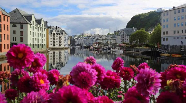 Purple flowers at the Brosund canal in Ålesund